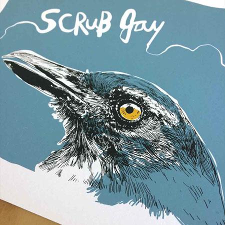 SCRUB-JAY